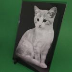 Foto kočky